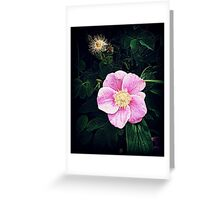 BackRoad Wild Rose Greeting Card