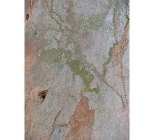 tree marks Photographic Print