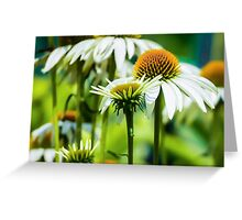 WHITE CONE DAISIES Greeting Card
