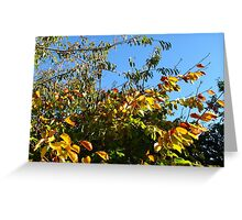 Cloudless Blue Sky and Autumn Leaves Greeting Card