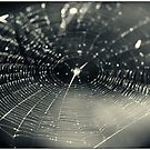 Web of Light - Araneidae Cyclosa conica Spider Web by MotherNature