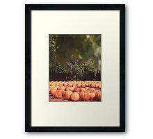 Pumpkins 16 Framed Print