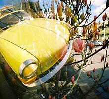 under magnolias  by Mel Dixon