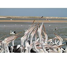 Pelicans and Fish Photographic Print