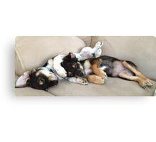 Snuggle Puppies Canvas Print