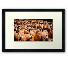 Pumpkins 18 Framed Print