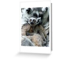 Baby Ring-tailed Lemur Greeting Card
