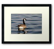 Canada Goose in Grenadier Pond, Toronto, Ontario, Canada Framed Print