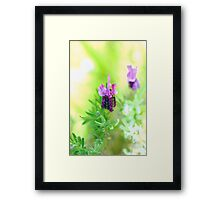 Purple Lavender Framed Print