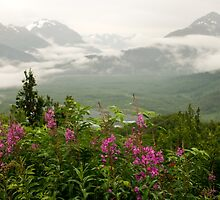 Fireweed and Foggy Mountains by lkamansky