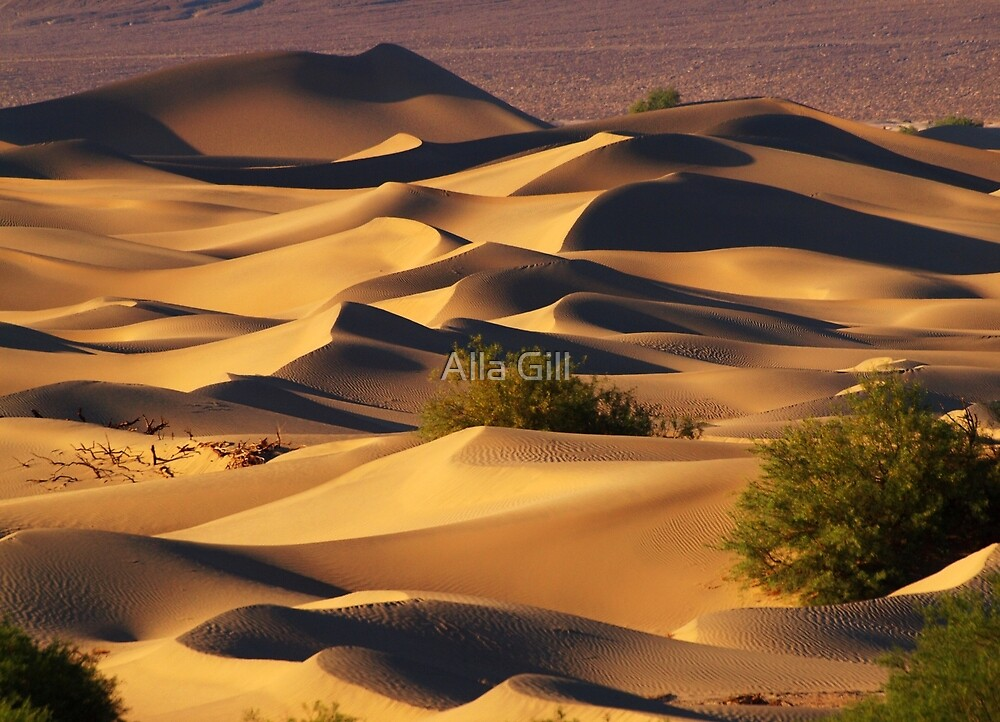 Sand Dunes by algill