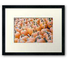 Pumpkins 25 Framed Print
