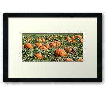 Pumpkins 26 Framed Print