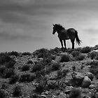 Simply Wild by Dyle Warren
