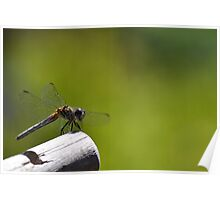 Dragonfly Buddy Poster