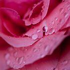 Rose after the rain by agu-photos