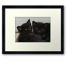 Twin Tabby Kittens Framed Print