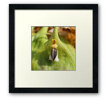 King Sunflower Seed Framed Print