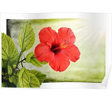 The red Hibiscus - Nature in Malta Poster