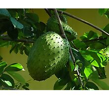 GUYABANO, THE SOURSOP FRUIT - Cancer Remedy- PICTURE/CARD Photographic Print