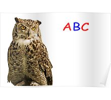 Owl ABC Poster