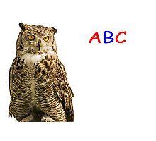 Owl ABC Photographic Print
