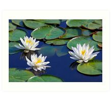 Tropical Water Lilies Art Print