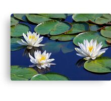 Tropical Water Lilies Canvas Print