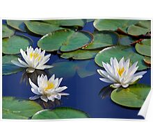 Tropical Water Lilies Poster