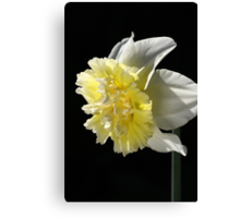 Daffodil Delight Canvas Print