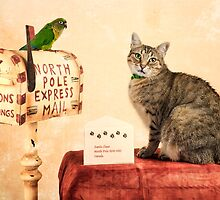 North Pole Express Mail by Tracy Riddell