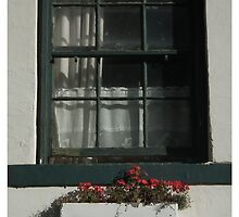 Window and Flowers by Shaun Swanepoel