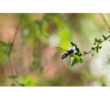 Little Hover Photographic Print