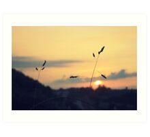 Nature at Sundown Art Print