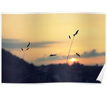 Nature at Sundown Poster