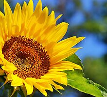 Sunflower Happiness by Christina Rollo