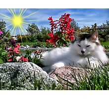 ๑۩۞۩๑ Babe Purring In My Garden๑۩۞۩๑ Photographic Print