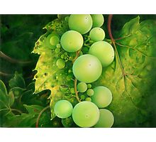 """The Grapes"" Photographic Print"