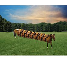 (✿◠‿◠)  HORSE LIMO RIDES SEVEN LETS RIDE LOL (✿◠‿◠) Photographic Print