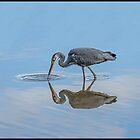 Grey Heron (Ardea Cineria) by ten2eight
