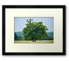 Big old oak tree on a meadow Framed Print