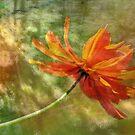 Cosmos Impression by Eileen McVey