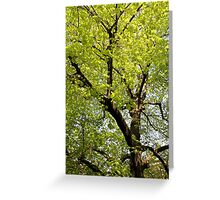 trees landscape Greeting Card