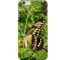 butterfly - mariposa iPhone Case/Skin