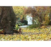 red cat near tree Photographic Print