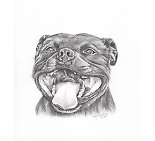 Staffie Smile - Staffordshire Bull Terrier Photographic Print