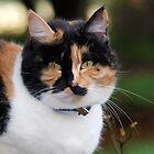 Ella - Tortoiseshell Cat by Bev Pascoe