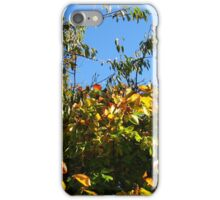 Cloudless Blue Sky and Autumn Leaves iPhone Case/Skin