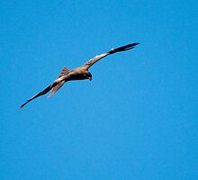 The Eagle by Dzi Dzig