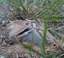Dead and buried 2 by Daniel Almeida
